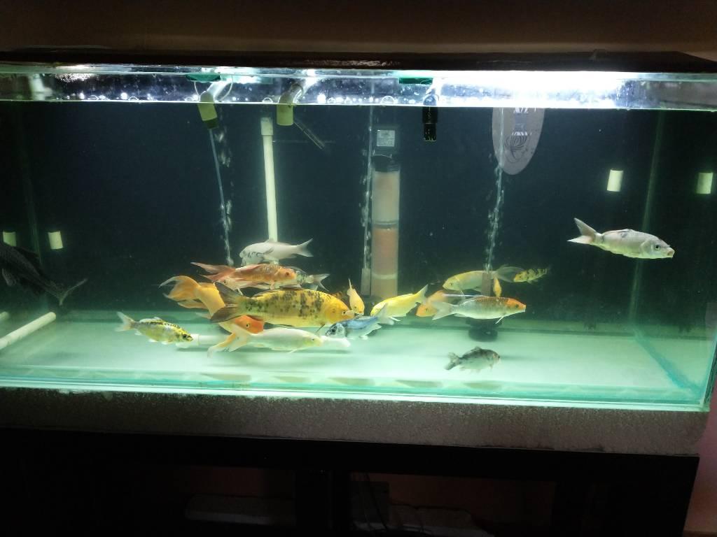 Combo de peceras completas y peces