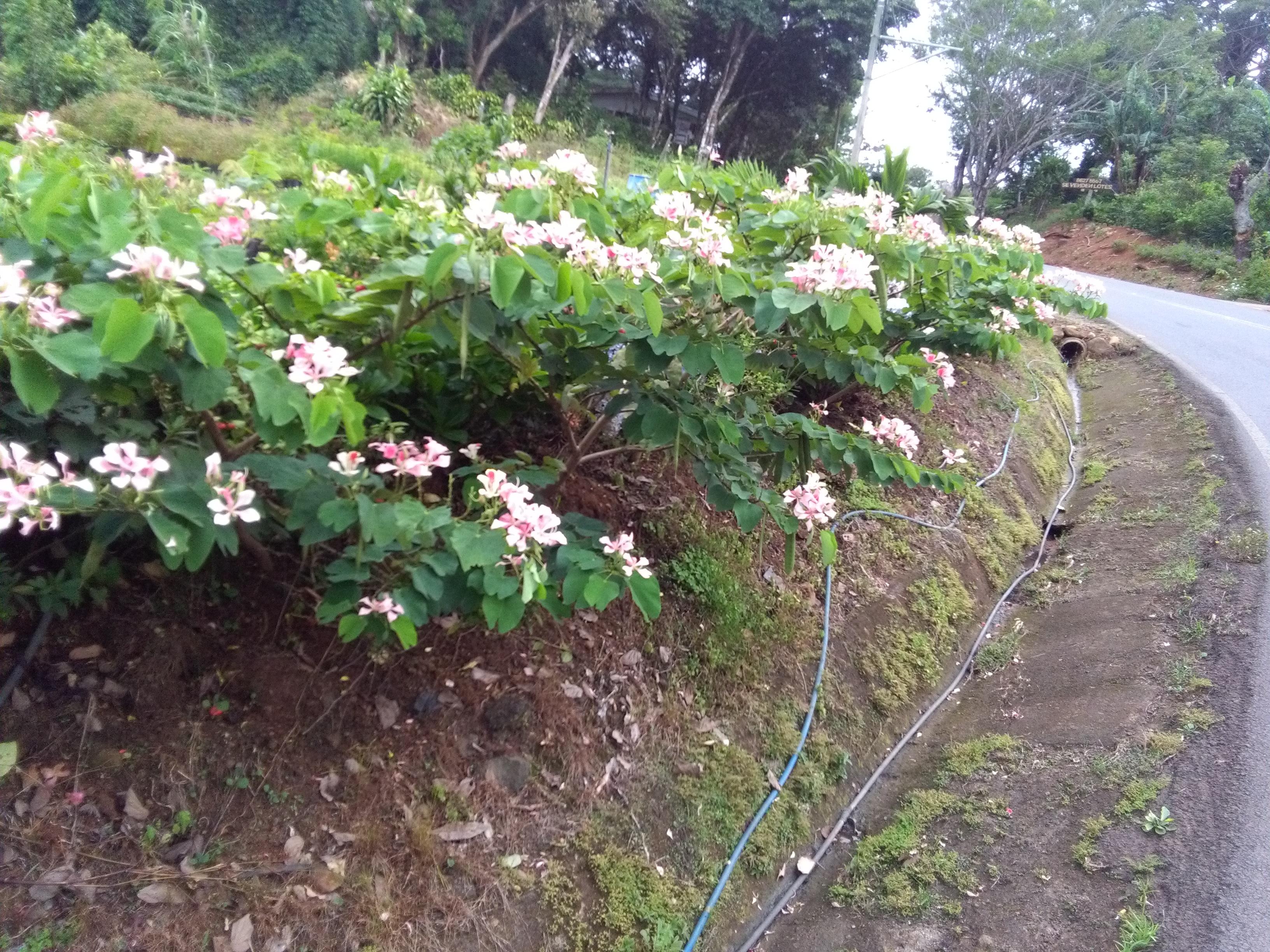 Árboles y plantas de variados tipos
