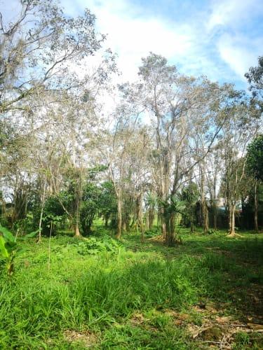 Finca De 9.4 Hectareas En Limón-Río Banano Cerca Del Aeropuerto